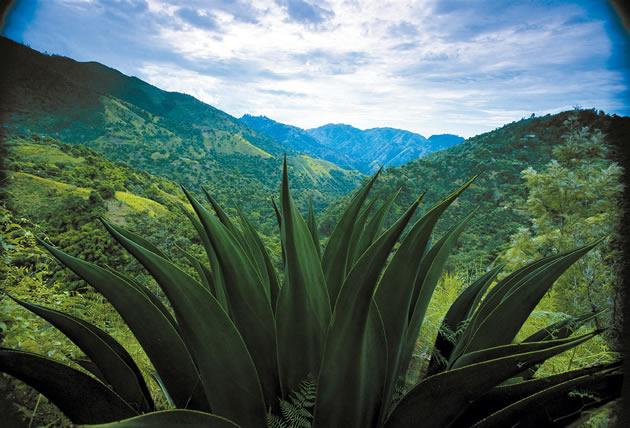 jamaica;_een_vakantiebestemming_voor_echte_natuurliefhebbers.jpg